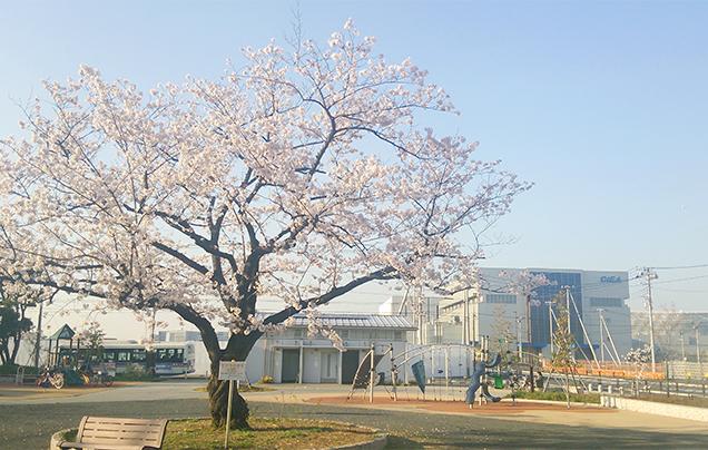 Image of Shimogawara Park