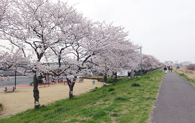 Image of Cycling and jogging road